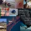 Метастазы Мексиканского залива. Часть 8.