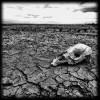 25 признаков приближения ужасающего водного кризиса глобального масштаба