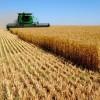 Генетически модифицированный прорыв или начало конца России? Постановление о посеве ГМО зерновых