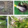 Дачные советы: секреты правильного полива сада