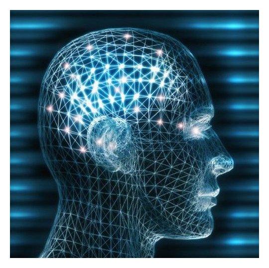 главенство мозга