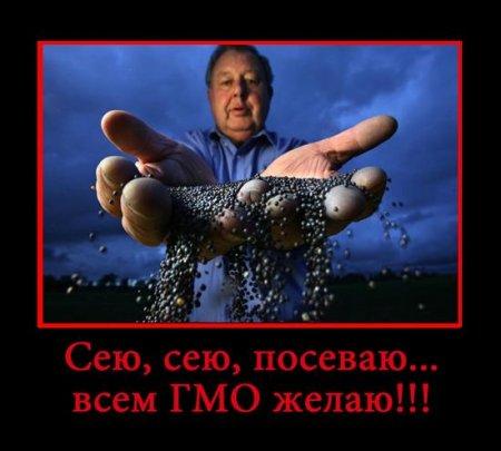 гмо в россии 2013