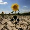 Крым на пороге засухи